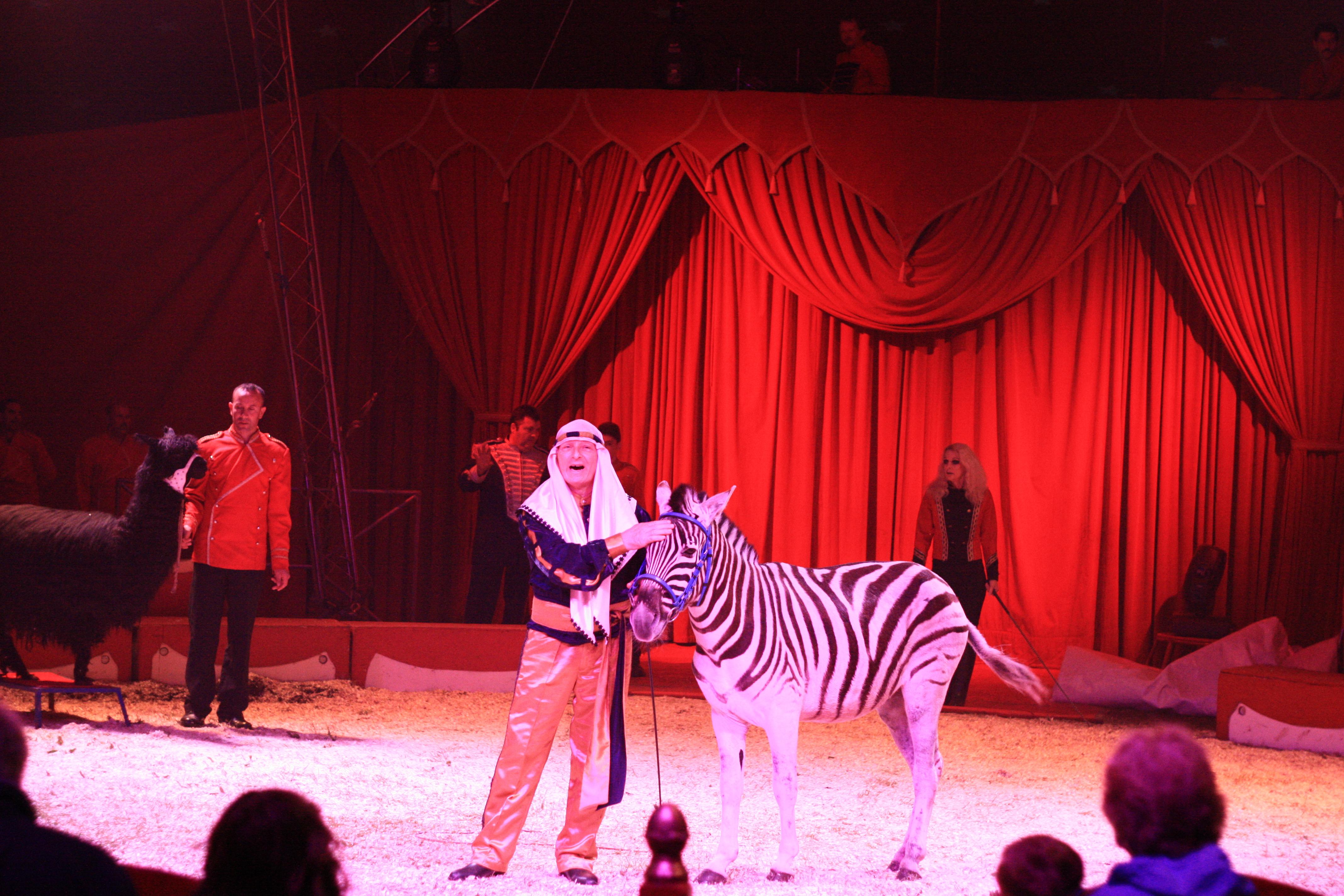 duffys zebra act 12