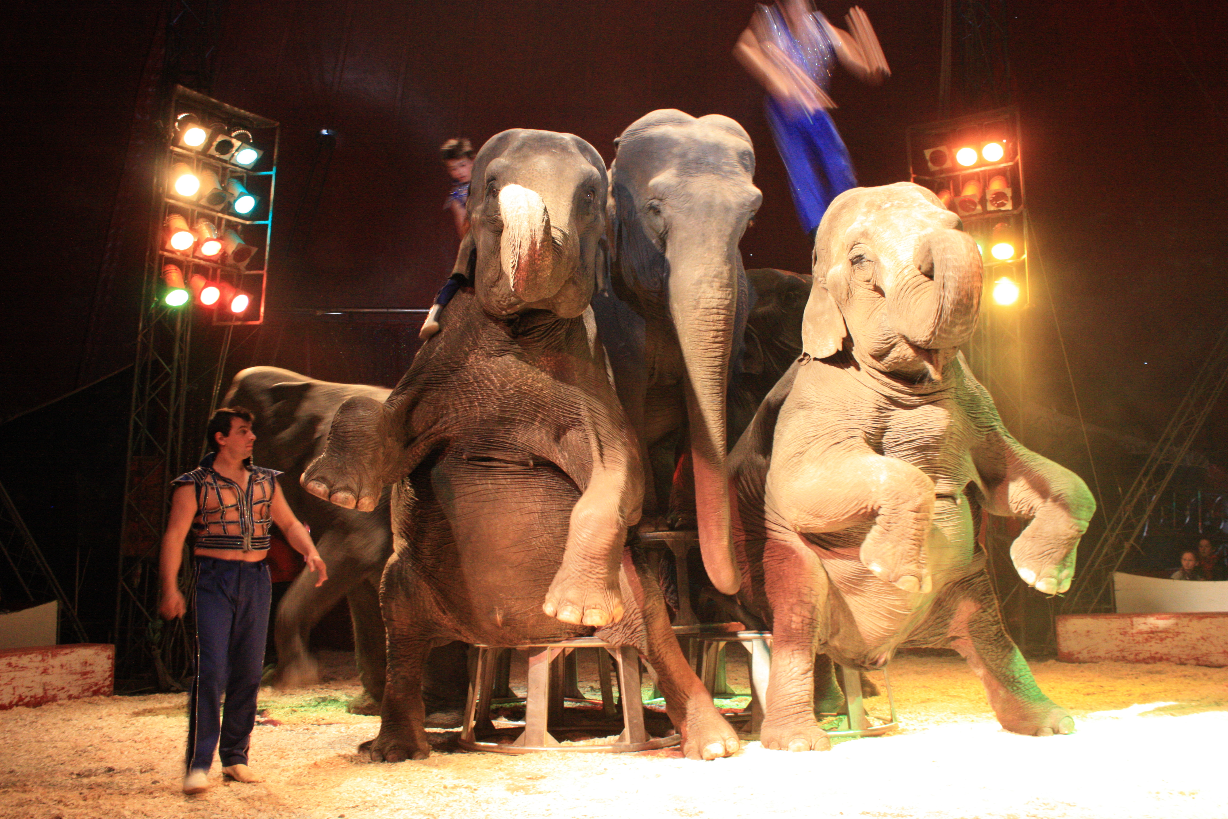 A problem of elephantine proportions « Freedom for Animals